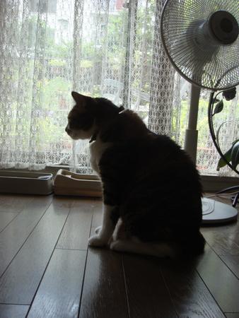 よた猫影.jpg