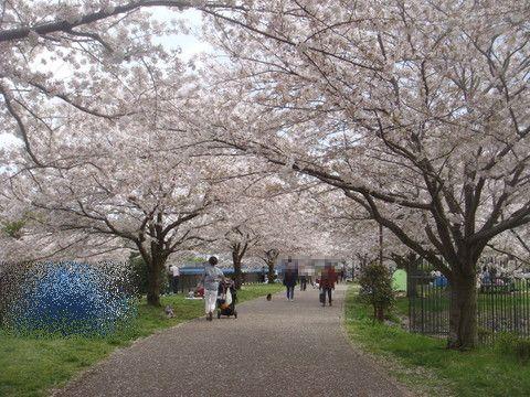 170415_引地川親水公園.jpg