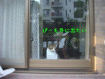 外に出たい.jpg